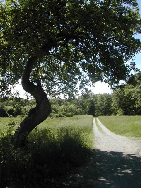 Chet Raymo's path