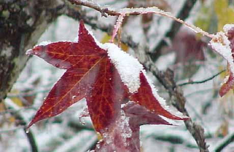 winterleaf.jpg