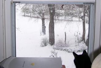 snow_backyard.jpg