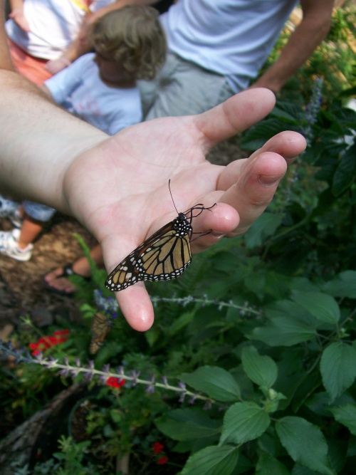 butterfly_myhand.jpg