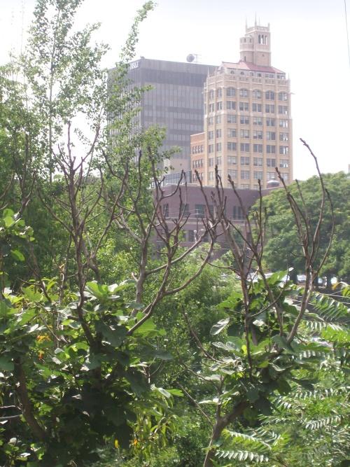 downtown_view.jpg