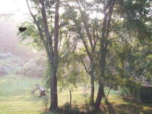 golden_morning.jpg