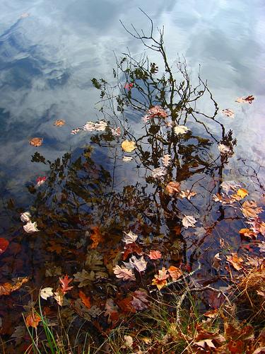 water_dreaming.jpg